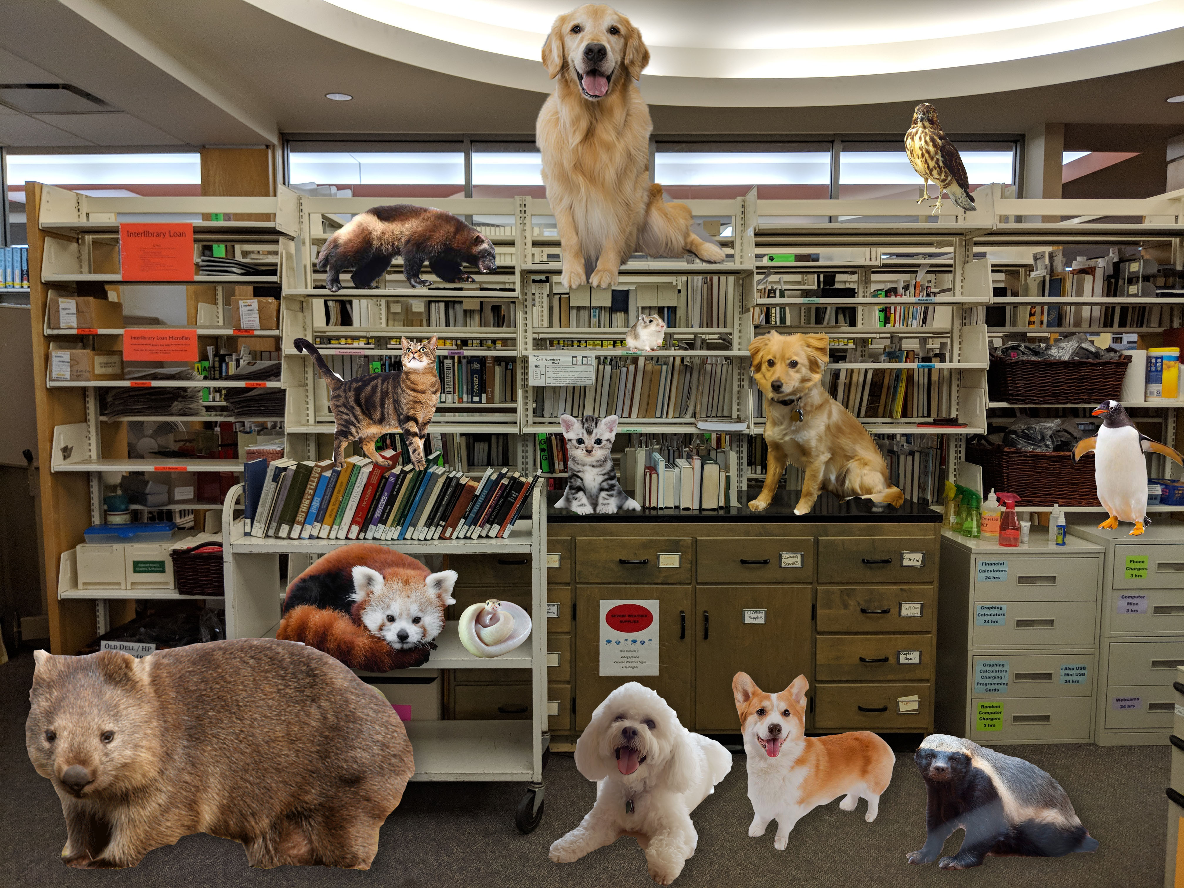 Library shelves with animals obviously photoshopped onto them: cats, dogs, badgers, wombat, penguin, fox and a hawk