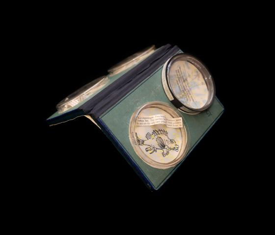 A book is pictured, with a green canvas cover and black taped binding. It is open, face down, in a three-quarters perspective and supported from below so that it is propped up like a tent. On each cover, two petri dishes are affixed, with line illustrations of aquatic animals on paper inside the dishes along with additional strips of paper describing them.